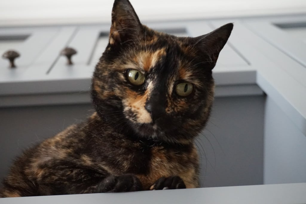 Della, our kitty