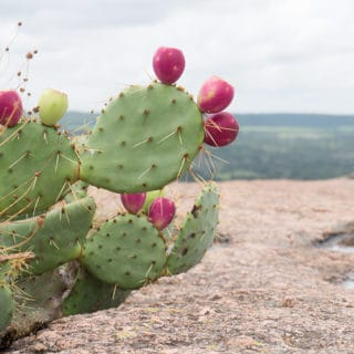enchanted-rock-cactus-3