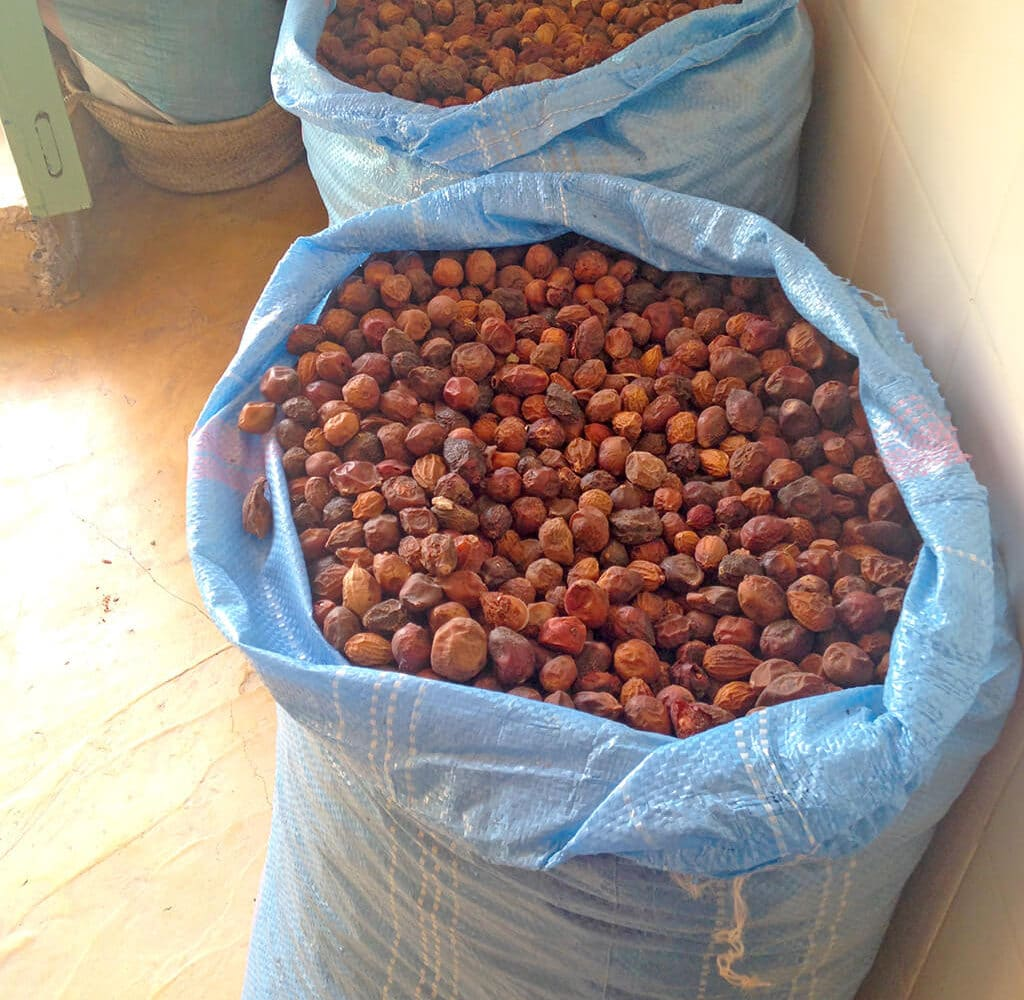 Dried Argan Fruit