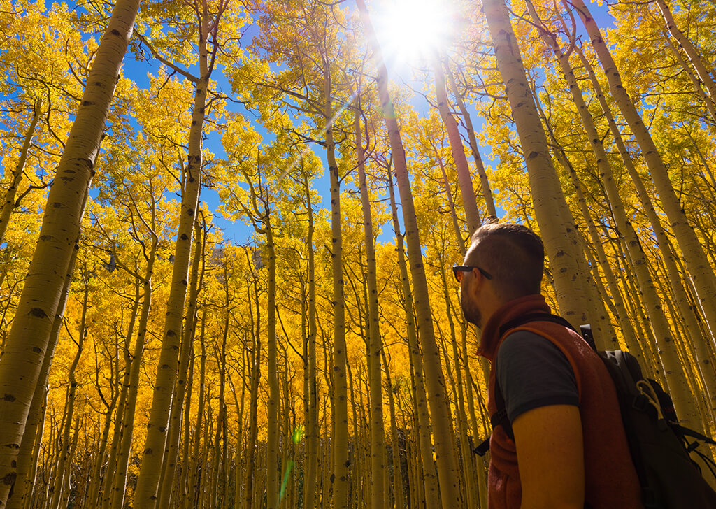 Locketts Meadow, Flagstaff, AZ